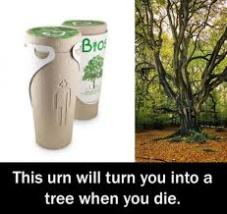 I want to be a tree
