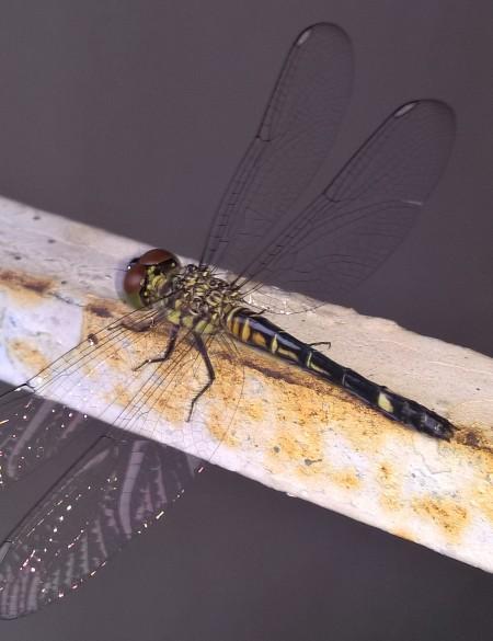 dragonfly-intricate.jpg