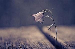 dying-flower.jpg